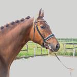 fnrs_paardrijles